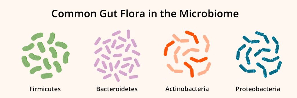 gut health 101 common gut flora